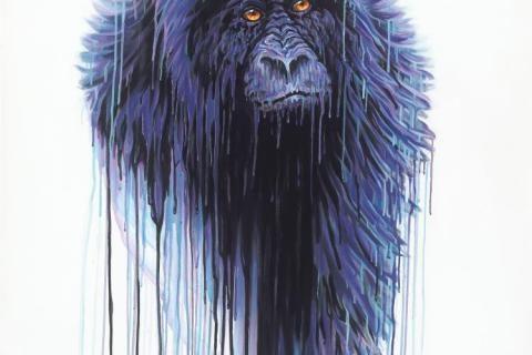 Virunga – New Collection