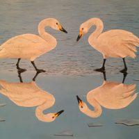 Robert Oxley Reflections
