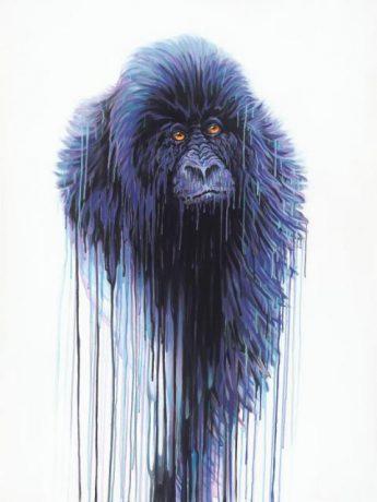 Virunga - New Collection